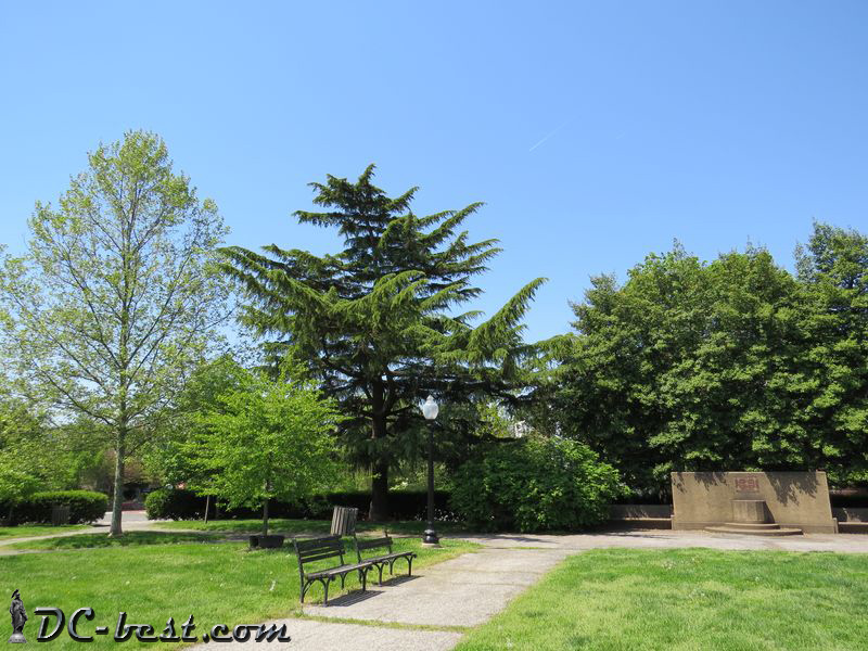 The Deodar cedar in the Folger Park
