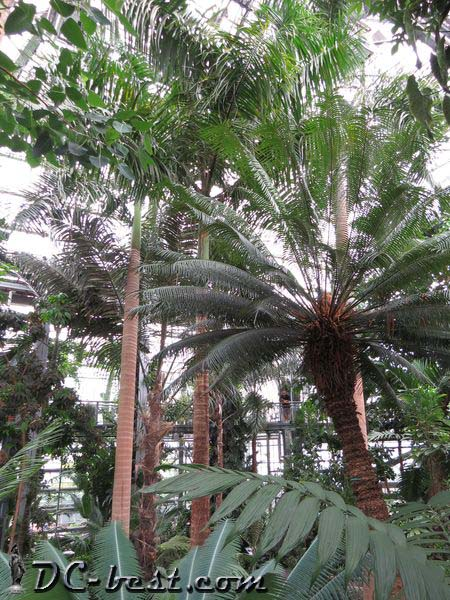 Inside the U.S. Botanic Garden