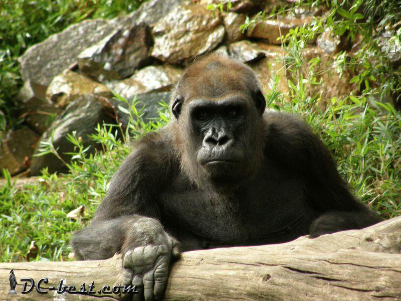 Вашингтонский Национальный Зоопарк